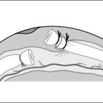 Figure_30_last